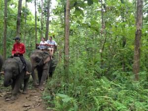 Trekking through the jungle on an ELEPHANT!
