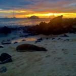 Sea lions enjoying the sunset...
