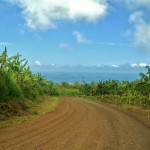 The road to Puerto Chino
