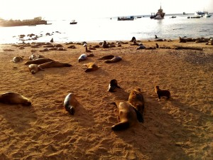 So many sea lions! It was great!