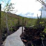 The trail to Cerro Tijieretas