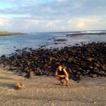 Sea lions at La Loberia