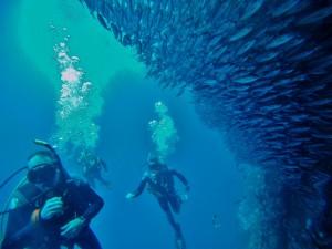 Amazing SCUBA diving at Leon Dormido