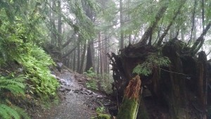 Beautiful rainforest in Ketchikan, Alaska